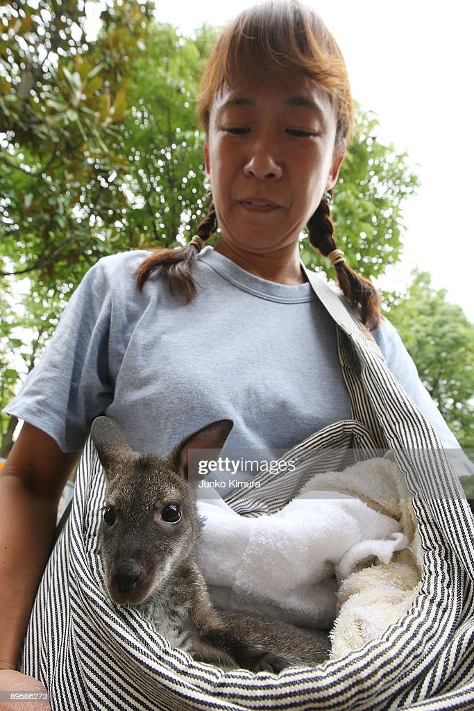 A zoo attendant holds a baby wallaby at Edogawa Natural Zoo on August 4, 2009 in Tokyo, Japan. The wallaby's mother neglected the baby in June and the staffs of the zoo have brought her up.