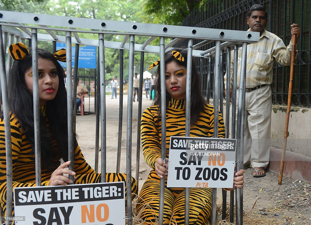 A zoo gatekeeper looks on as activists from the People for the Ethical Treatment of Animals pose with body suits resembling tigers as they sit in a...