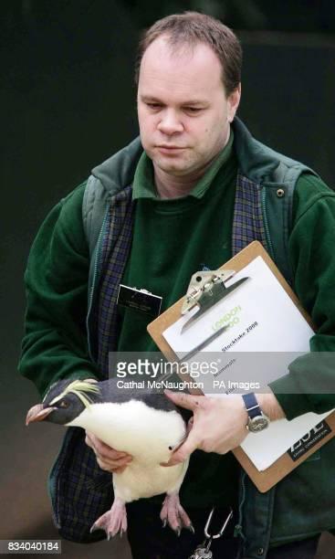 Zoo Keeper Darren Jordan takes note of a Rock Hopper Penguin during the annual London Zoo stocktake