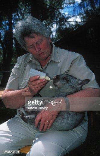 Zoo keeper, Enid Latham, feeding orphaned baby wombat, Vombatus ursinus, Western Plains Zoo. Australia.