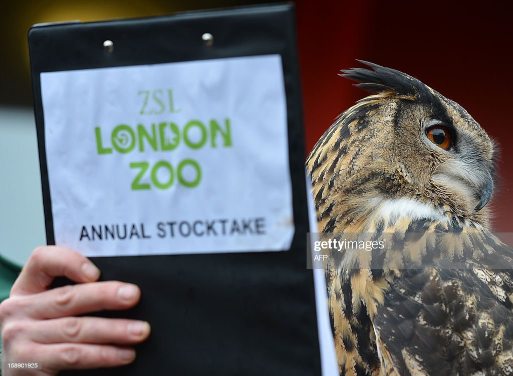 A zoo keeper poses with a European Eagle Owl during the annual stocktake at ZSL London Zoo in central London on January 3, 2013. ZSL London Zoo embarked on January 3 on their annual complete head-count of every animal at the zoo, which houses over 17,000 animals.