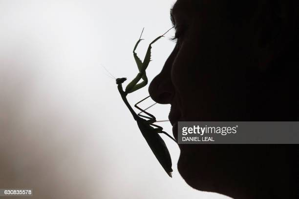 TOPSHOT A zoo keeper poses with a Praying Mantis during the annual stocktake photocall at London Zoo in central London on January 3 2017 The...