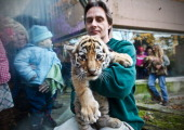 Zoo keeper Rene Hinte holds a young tiger on November 20 2011 at the zoo in Magdeburg eastern Germany The animal is one of two female tiger babies...