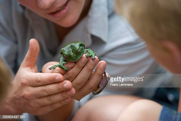 Zoo keeper showing children Green Tree Frog, close-up