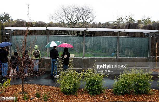 Zoo patrons look through a newly installed barrier in an enclosure where a Siberian tiger escaped in December 2007 at the San Francisco Zoo February...