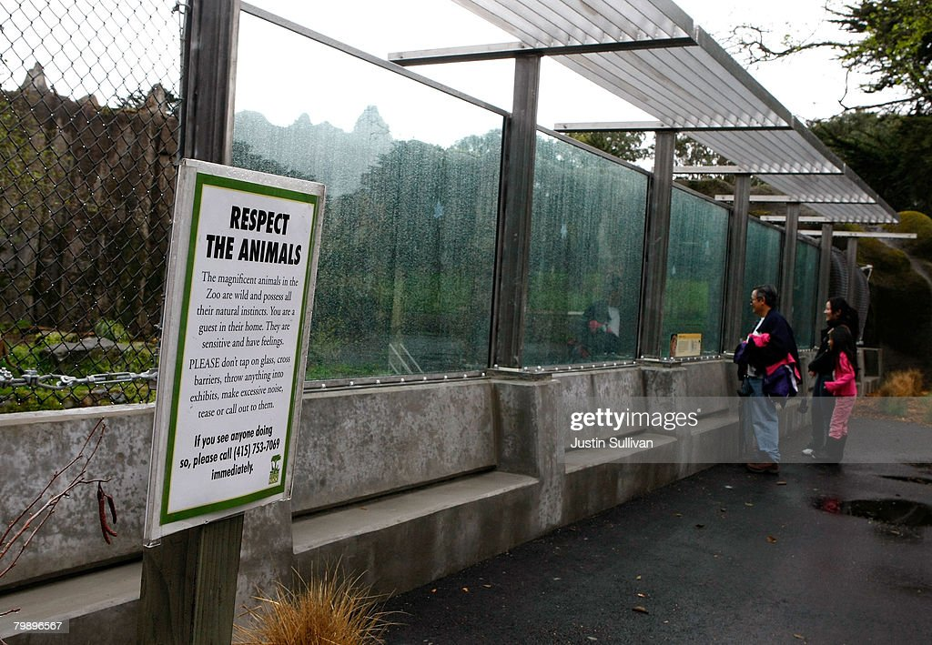 Zoo patrons look through a window at a renovated big cat grotto at the San Francisco Zoo February 21, 2008 in San Francisco, California. The San Francisco Zoo reopened its big cat grottos for public viewing almost two months after a man was fatally mauled by a Siberian tiger that escaped from its enclosure on Christmas day. Renovations to the enclosures included an extension of the concrete moat to 16 feet, 4 inches from the bottom, installation of glazing and fencing barrier, and installation of a hot wire electric fence.