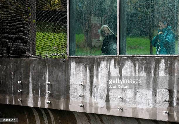 Zoo patrons look through a window at a renovated big cat grotto at the San Francisco Zoo February 21 2008 in San Francisco California The San...
