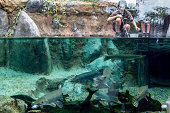 Zoo staff feed fish in the Mississippi River habitat during a media tour ahead of the opening of River Safari at the Singapore Zoo on March 25 2013...
