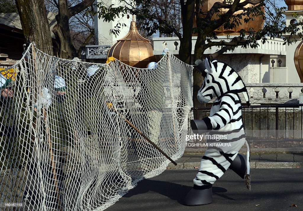 A zoo staff member dressed as a zebra performs in a drill to practice what to do in the event of an animal escape at the Tama zoo in western suburb of Tokyo on February 1, 2013. About 60 zookeepers participated in the annual drill.