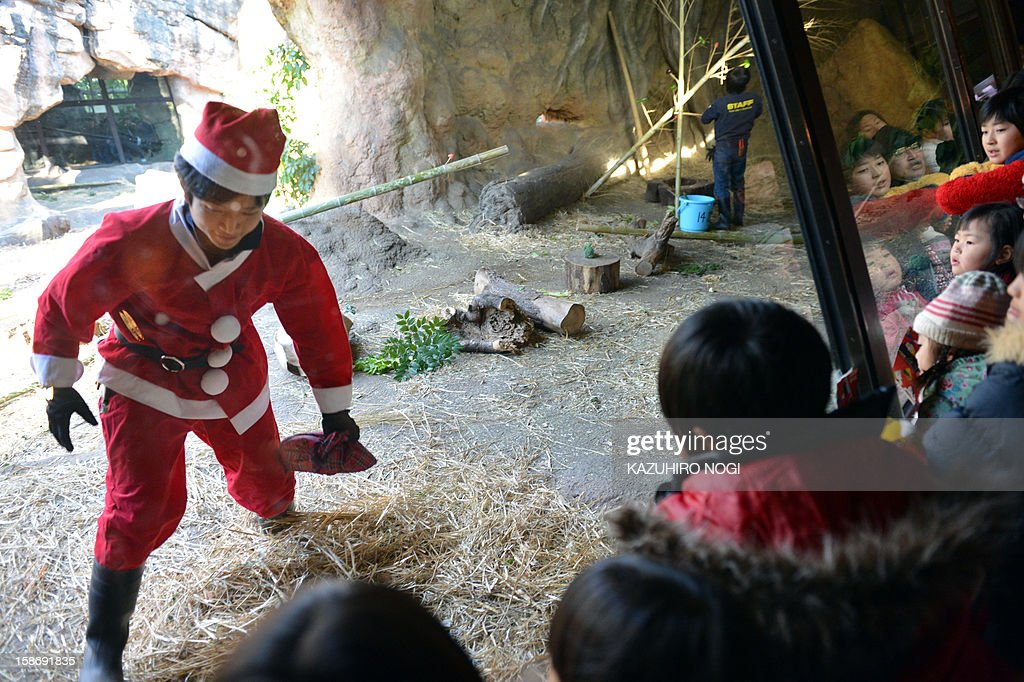 A zoo staff member wearing a Santa Claus costume (L) prepares a special feed for the gorillas at Tokyo's Ueno Zoo on December 24, 2012. The event was as part of an annual 'Christmas presents' attraction.