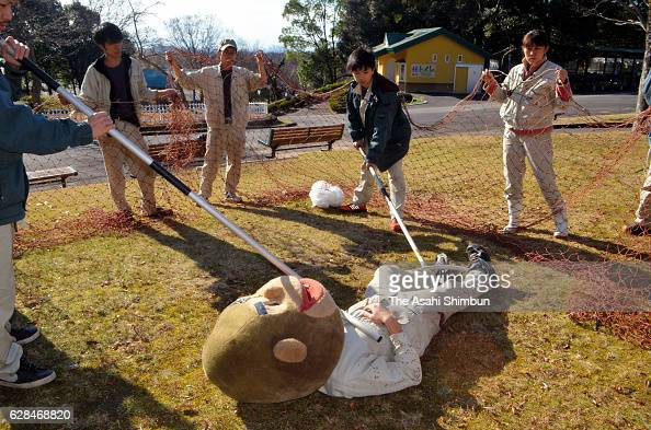 A zookeeper captures a staff wearing a gorilla mask while other staffs surround with net during an exercise at the Japan Monkey Center on December 7...