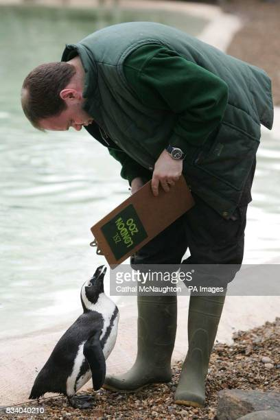 Zookeeper Darren Jordan takes note of an African Black Footed Penguin during the annual London Zoo stock take