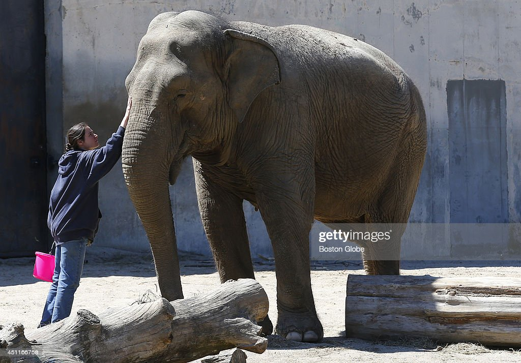 Zookeeper Karen 'Kay' Santos puts her hand on one of the elephants at the Buttonwood Zoo in New Bedford Mass on April 24 2014