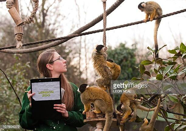 Zookeeper Kate Sanders poses for photographers with a group of spider monkeys during the annual stocktake at London Zoo north London on January 4...