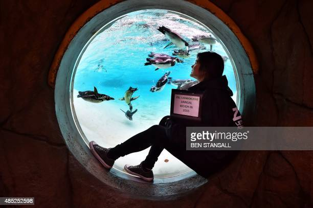A zookeeper poses for pictures as she counts penguins during a photocall at London Zoo on August 26 to promote the zoo's annual weighin event With...