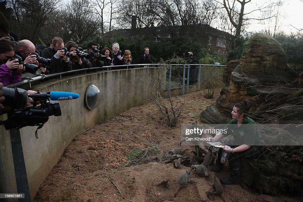 A zookeeper poses with Meerkats during London Zoo's annual stocktake of animals on January 3, 2013 in London, England. The zoo's stocktake takes place annually, and gives keepers a chance to check on the numbers of every one of the animals from stick insects and frogs to tigers and camels.