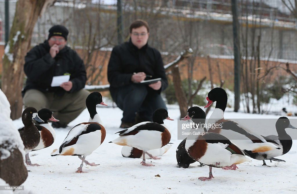 Zookeeper Yancy Rentz (L) and biologist Benjamin Ibler count ducks in a bird enclosure during the annual animal inventory at Zoo Berlin zoo on December 12, 2012 in Berlin, Germany. The zoo conducts the once-a-year inventory over a period of several months, depending on the species, to assess such factors as the state of animal colonies, the presence of foreign species and the true number of species and their members.