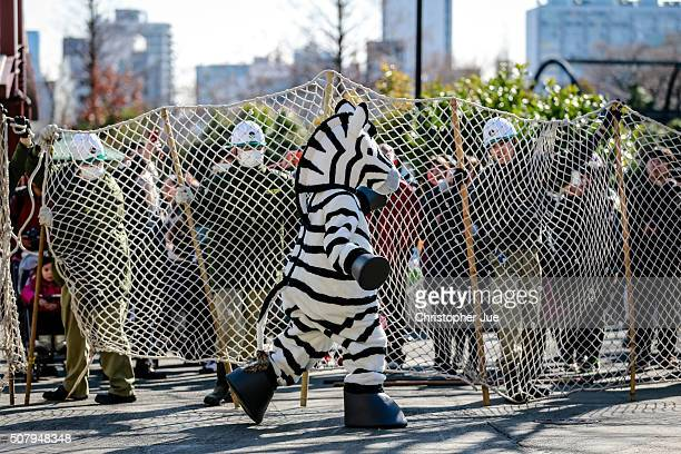 Zookeepers hold up a large net barricade to capture a zoo staff member dressed as a zebra at Ueno Zoo on February 2 2016 in Tokyo Japan In the drill...