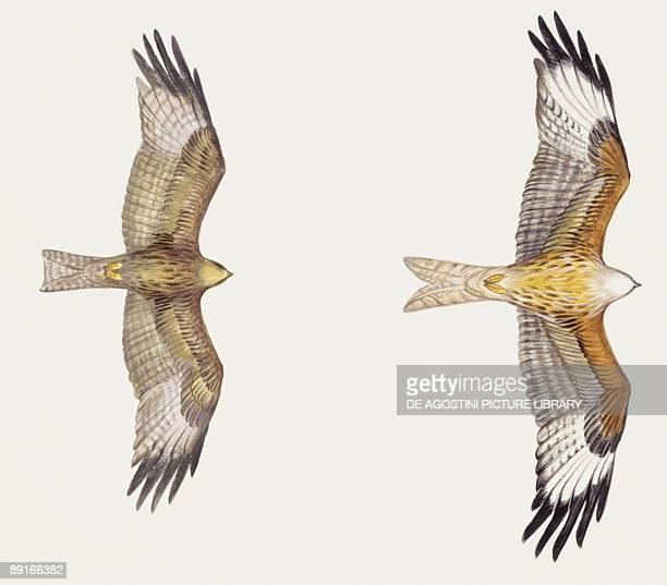 flying kite illustration - photo #38