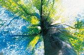 Zoom effect on tree