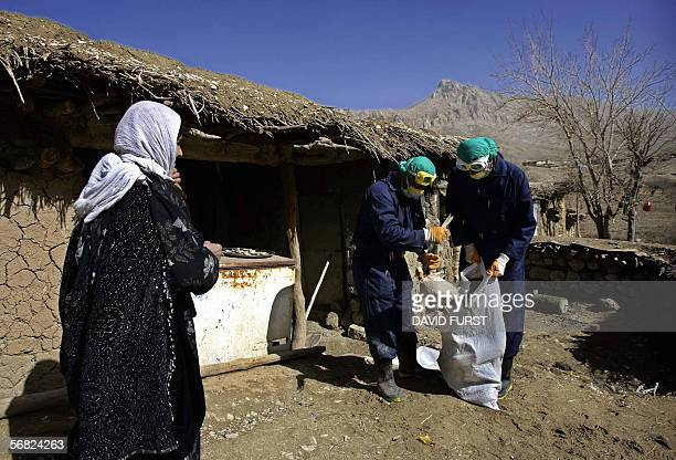 A Kurdish woman looks on as Iraqi government health workers place a duck in a nylon sack in an effort to help prevent the continuing spread of the...