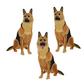 Set of german shepherd dogs. Vector illustration isolated on the white background