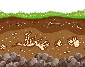 Soil layers with bones. Soil surface horizons with fossil reptile skeleton, upper layer of earth structure with mixture of organic matter, minerals. Vector flat style cartoon illustration