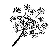 sprig and fennel seeds are drawn with a black outline