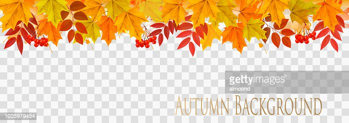 Abstract autumn panorama with colorful leaves on transparent background Vector : stock vector