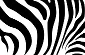 Abstract background skin of a zebra, white and black color. Wild Animals.