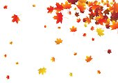 Abstract background with flying maple leaves. Fall season greeting card, poster, flyer. Vector illustration isolated on a white background.