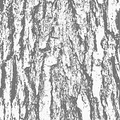Grunge texture black and white rough - bark tree texture vector image for your creative.