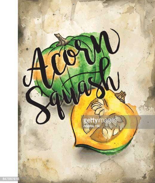 Acorn Squash Painted in Watercolor on Rustic Brown Background. Vector EPS10