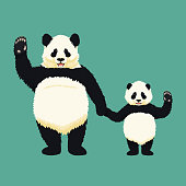 Adult giant panda and baby panda standing holding hands and waving. Chinese bear family. Mother or father and child. Rare, vulnerable species.