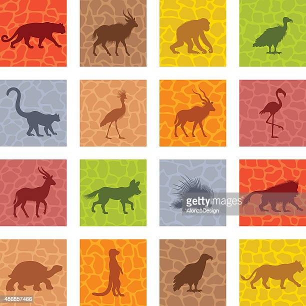 African Animal Icon Set