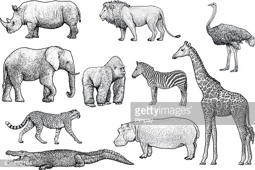 African animals illustration, drawing, engraving, ink, line art, vector : Vector Art