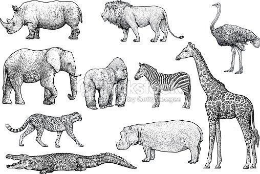 アフリカの動物イラスト、ドローイング、彫刻、インク、ライン アート、ベクトル : ベクトルアート