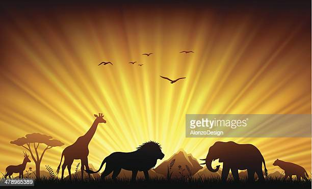 African Animals in Sunset