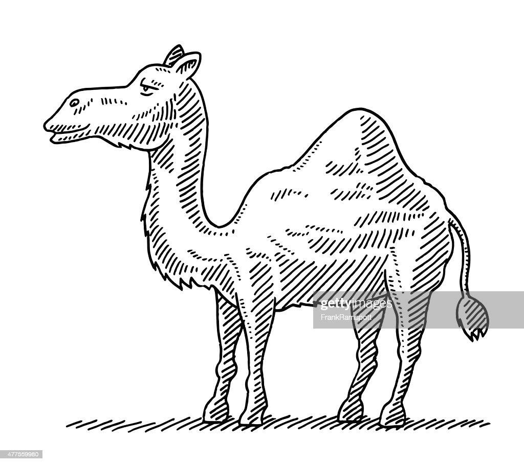 african dromedary camel cartoon animal drawing vector art getty