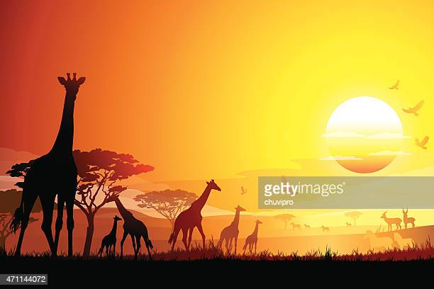 African landscape with Giraffes silhouettes in hot day