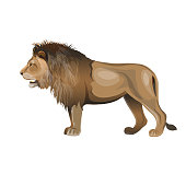 African lion standing. Side view. Vector illustration isolated on the white background