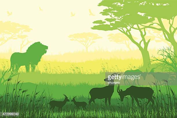 African wildlife and inhabitants of the jungle