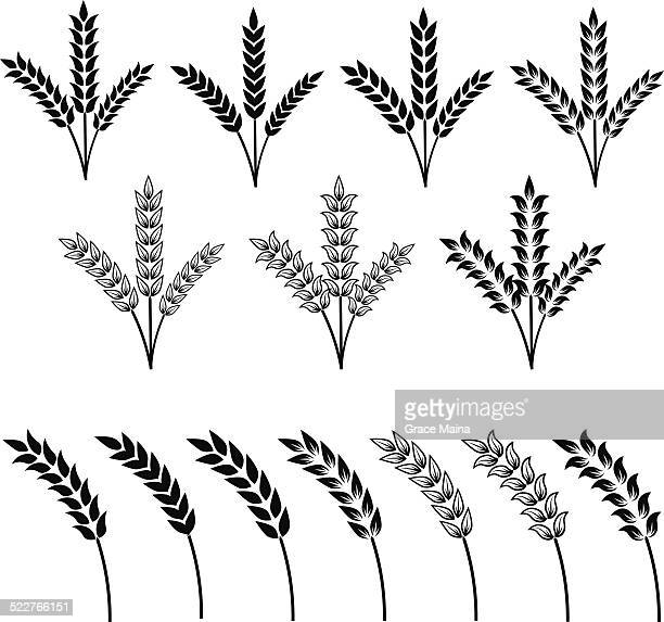 Agricultural plants in different styles - VECTOR