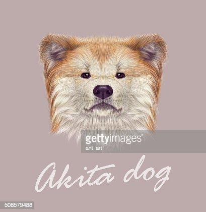 Japanische Akita Inu Hund. : Vektorgrafik