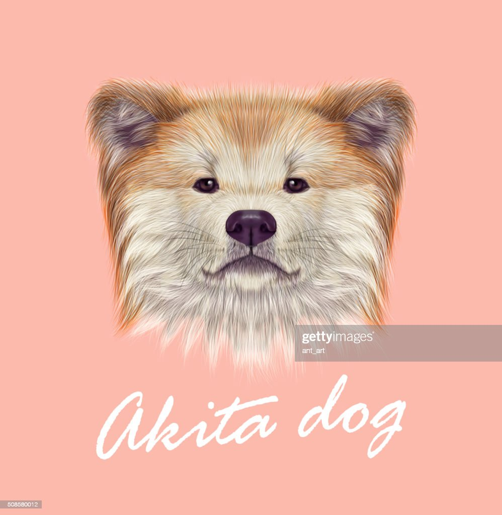 Akita Inu Japanese Dog. : Vector Art