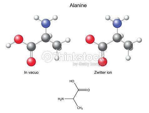 Alanina Químicas Fórmula Estrutural E Modelos Arte Vetorial