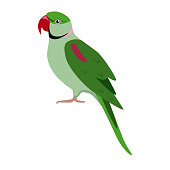 Alexandrine ringneck parrot icon in flat style. Exotic tropical bird symbol isolated on white background