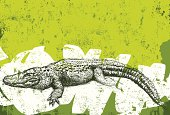 An American alligator over an abstract background. The background extends outside the square clipping mask. To edit, select the background and go to OBJECT-> CLIPPING MASK-> EDIT CONTENTS or REL