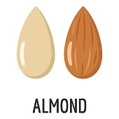 Almond icon. Flat illustration of almond vector icon for web