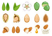 almond seed develop and product from almonds.